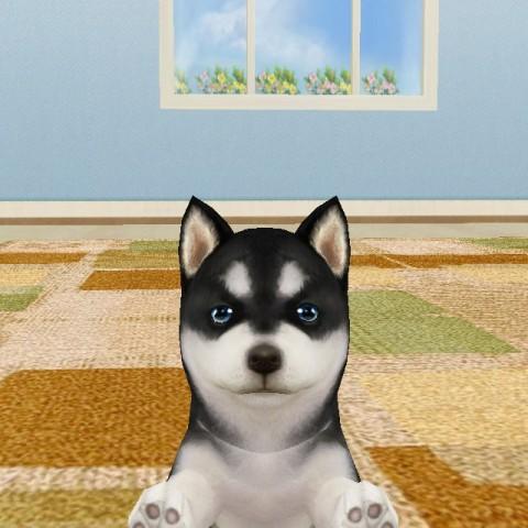 【funny Game】可以在手機裡養小狗的「掌中萌狗」