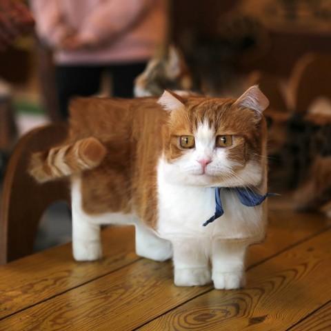Minecraft趣聞:當身旁的寵物動物也變成方塊狀時,你會覺得親切還是怪怪的